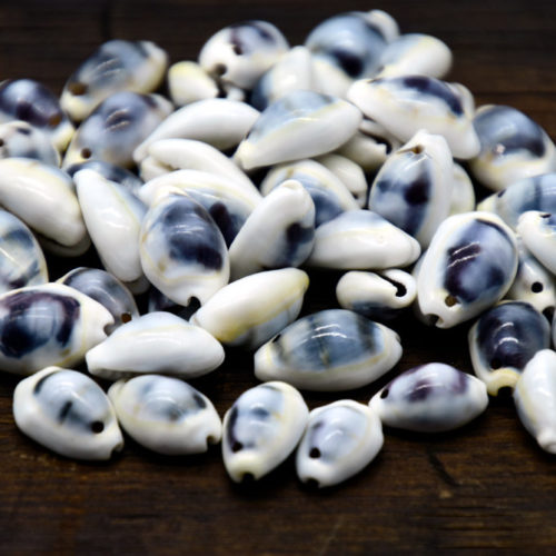 Drilled Moneta Shells,  40pcs,  Full Shell, One Hole, Natural Shells, Cowry -B809