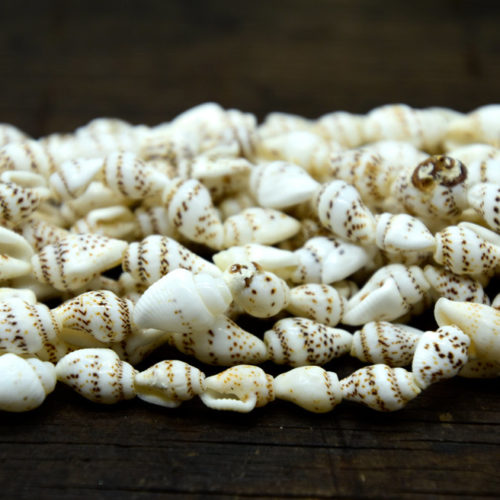 Nasaa Shell Beads,  22 Inch Strand, 10x8mm,  White Shells -B887
